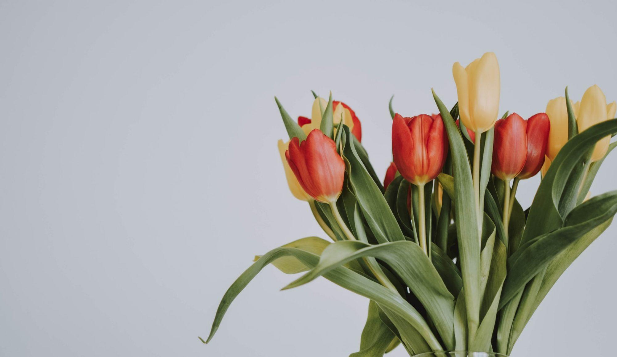 Tulip Town Bulb Company